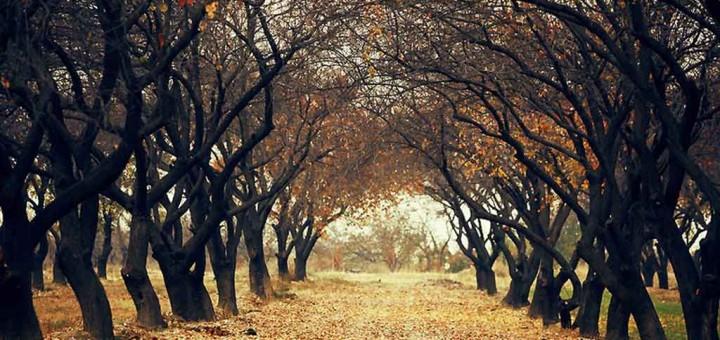 как поймать позитив осенью