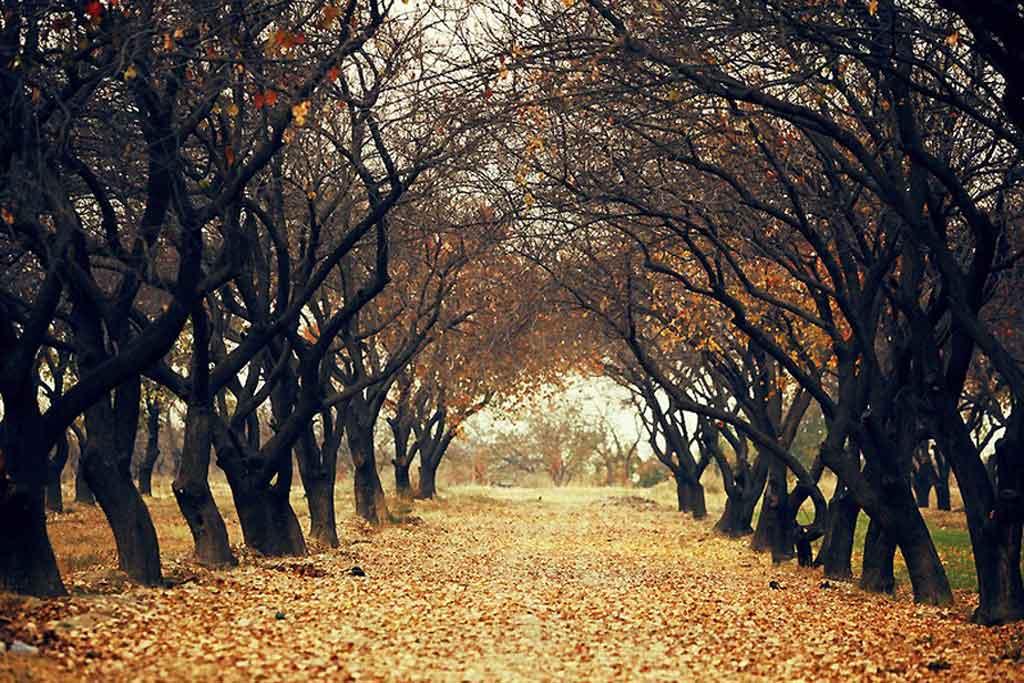 Дневник хорошего настроения или как поймать позитив осенью